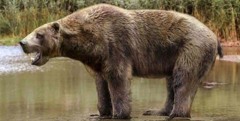 В Канаде нашли останки доисторического медведя с кариесом