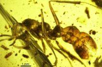 Ученые открыли подвид «адских муравьев» с металлической челюстью