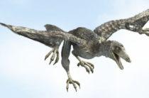 Обнаружено пропавшее звено эволюции между динозаврами и птицами
