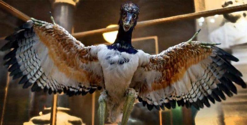 Ископаемое с перьями и когтями может быть новым видом археоптерикса