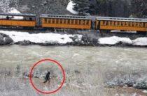 Странные существа на железных дорогах