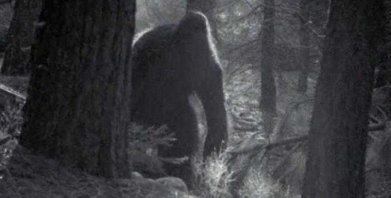 Бигфут был замечен в национальном парке штата Вашингтон
