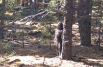 Житель Аризоны заметил бигфута неподалеку от кемпинга Моголлон Рим