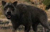 Амарок: ужасное волкоподобное существо Крайнего Севера