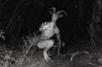 Человек-козел — городская легенда озера Белая скала, Техас, США