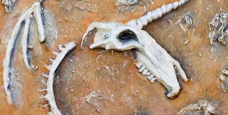 Найден хорошо сохранившийся череп «единорога» из Казахстана