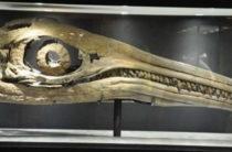 В Англии найдена кость, принадлежащая самому крупному животному в мире