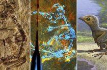 Птенец возрастом в 127 млн лет раскрыл тайны эволюции птиц