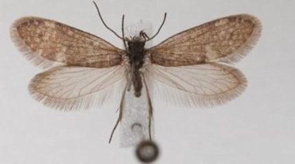 Первые бабочки появились более 200 млн. лет назад