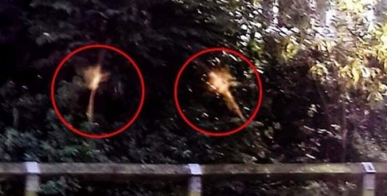 В Великобритании обнаружены летающие феи