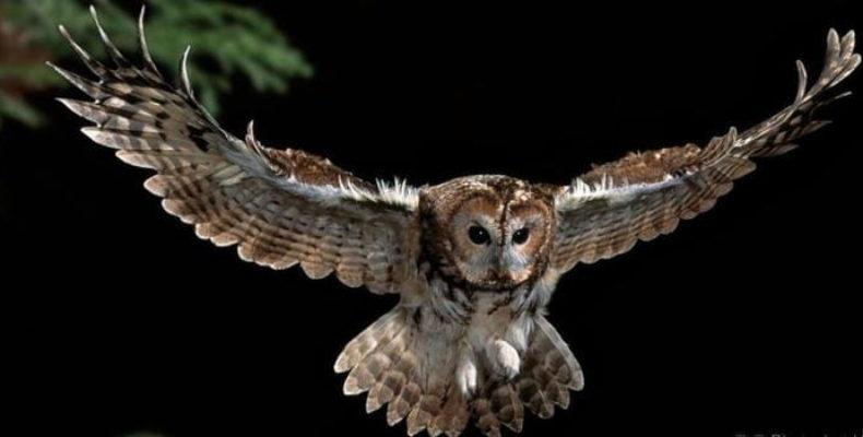 Легендарная птица возвращается в «Город ветров»