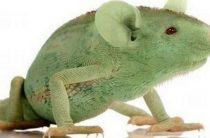 Неизвестный гибрид рептилии и грызуна видели в Нидерландах