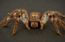 Гигантский паук напал на мышь и попытался съесть её