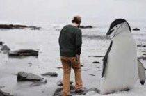 Ученые обнаружили останки полутораметрового пингвина в Новой Зеландии