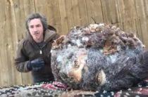 В США мужчина опубликовал видео о замороженной голове Бигфута