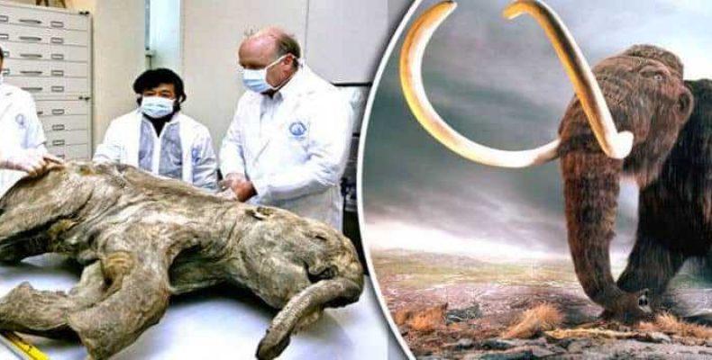 Ученые готовы клонировать мамонтов, чтобы спасти Арктику