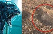 Гигантские следы неизвестных существ в индийской деревне