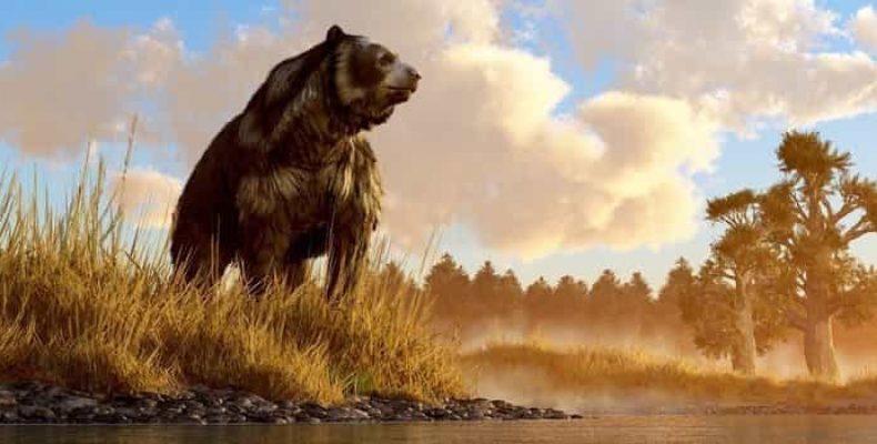 Иркуйем: поиски загадочного медведя