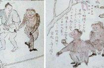 Странные существа южных островов Японии