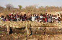 Кровавый Густав: хроники крокодила-людоеда