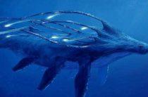 Чудовище голубых глубин Багамских островов