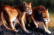 Пятнистый лев (марози): легенда или вымерший вид