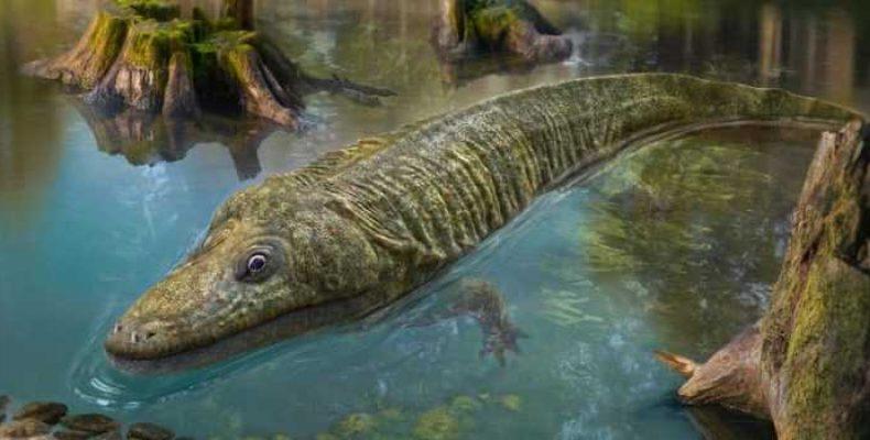 Лох-несское чудовище: теория гигантской саламандры (2 часть)