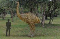 Ученые близки к воспроизведению генома птицы моа, вымершей 700 лет назад