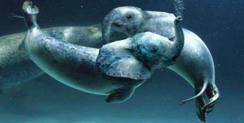 Глобстер Трунко и другие неопознанные морские животные