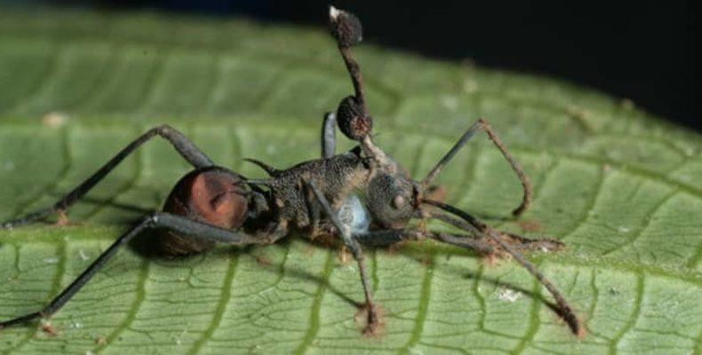 Убийственный червь-паразит способен превратить насекомое в зомби