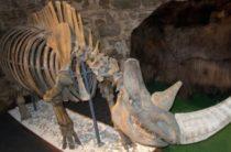 Тайна неизвестного животного Ледникового периода поставила ученых в тупик