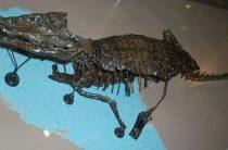 Необычная находка в Шотландии: кости рептилии-собаки