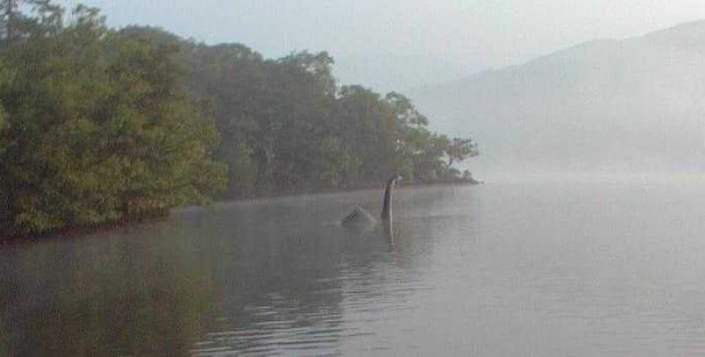 В Южной Каролине заметили существо похожее на «динозавра»