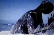 Нинген: огромная белуха или неизвестный вид русалок