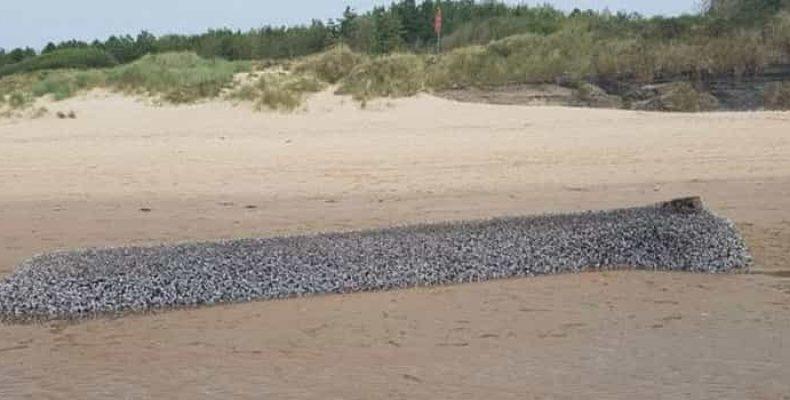 Монстр на пляже в Уэльсе
