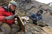 Ученые обнаружили окаменелые мозги древнего морского насекомого