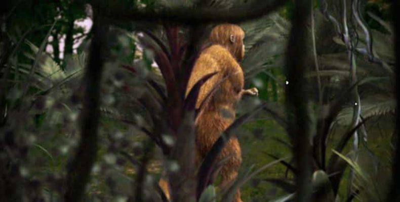 Новый вид приматов доказывает существование криптида с Суматры
