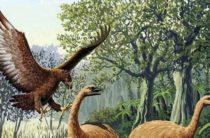 Гигантский орёл Хааста