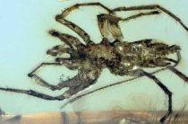 Найден новый подвид доисторических пауков с жалом скорпиона