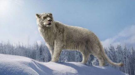 В Кемеровской области обнаружены кости пещерного льва