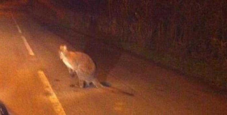 Пассажир такси заметила странное существо в Теннесси