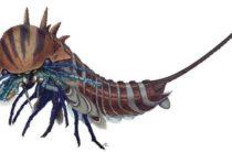 Найден свирепый предок пауков, живший более 508 млн лет назад