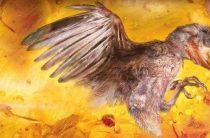 Ученые обнаружили наиболее полный скелет птицы возрастом 99 млн. лет