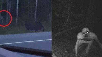 Жительнице Канады удалось заснять на камеру легендарного Рейка