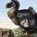 «Другой Додо»: У вымершей птицы был родственник с острова Родригес