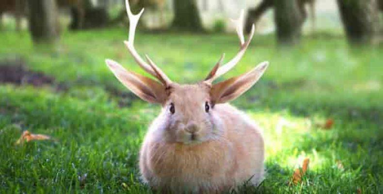Рогатый заяц или кролень