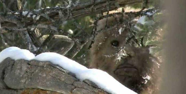 Моно Гранде — жестокий гуманоид южноамериканских джунглей