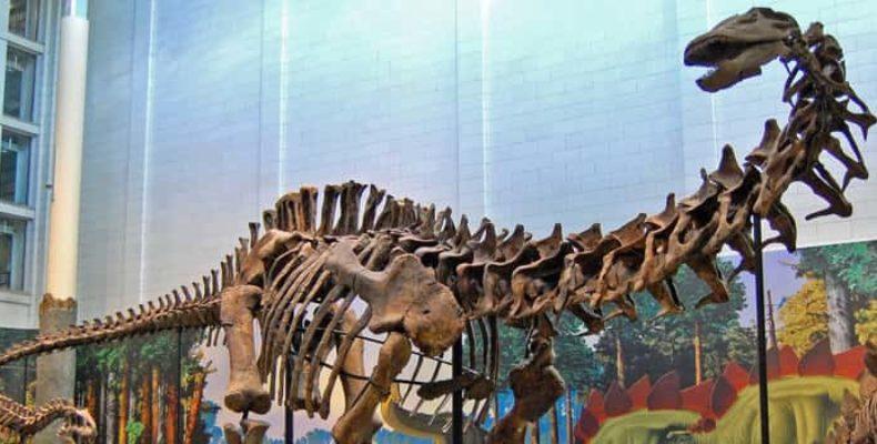 Размеры самого большого динозавра превышали 35 метров