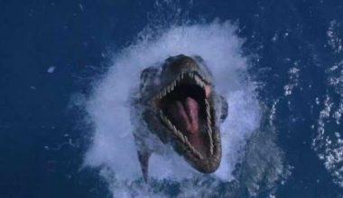 Агрессивные морские чудовища канадского острова Кейп-Сейбл
