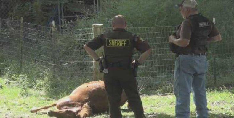 Загадочные убийства животных в Томпкинсвилле, штат Кентукки